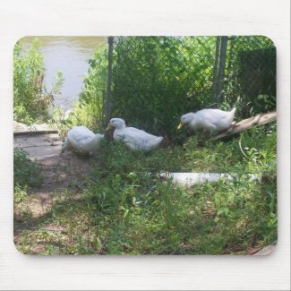 White Ducks on a Ramp Mousepad mousepad
