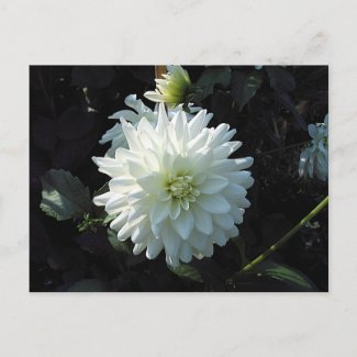 White Flower postcard