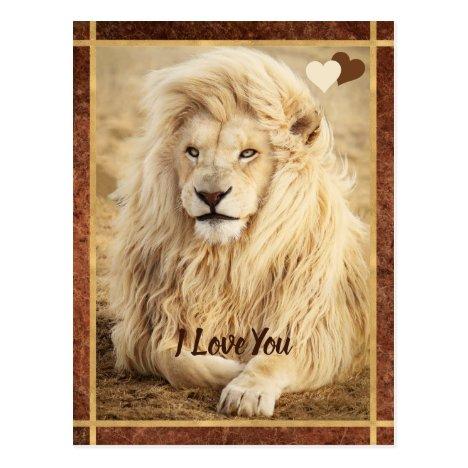 White Lion Photo I Love You Postcard