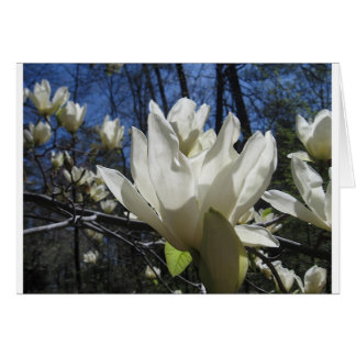 White Magnolia in North Carolina Greeting Cards