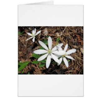 White Woodland Flower Greeting Card