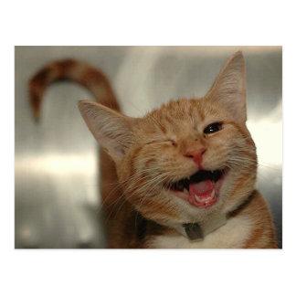 Résultat d'images pour chat content
