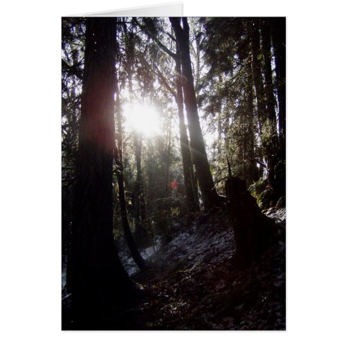 Winter Sunrays #16 card