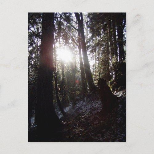 Winter Sunrays #16 postcard