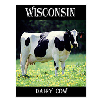 Dairy Cow Gifts On Zazzle