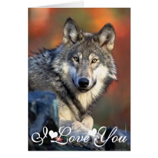Wolf Photograph Image I Love You Card
