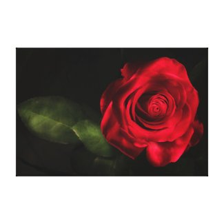 Wrapped Canvas Fine Art Print Stunning Red Rose Canvas Print