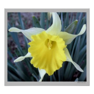 Yellow Daffodil Poster Print by S.Lynnette