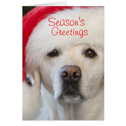 Yellow Lab Cards Yellow Lab Card Templates Postage