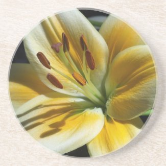 Yellow Lily Coaster coaster