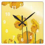 Yellow Narcissus Daffodil Square Wallclocks