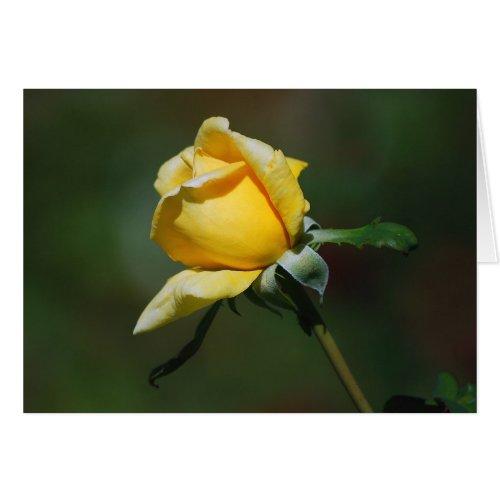 Yellow Rose Bud Card card