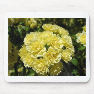 Yellow Rose Bush Mouse Pads
