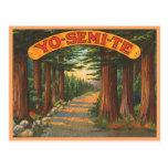 Yosemite California vintage scene Postcard