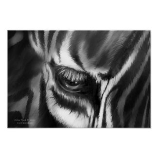 Zebra Black And White Fine Art Poster/Print