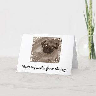 Geburtstagswunsch Susseste Haustiere Hund Geburtstag