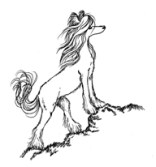Rocky Mountain Chinese Crested Rescue drawing DD LaRue