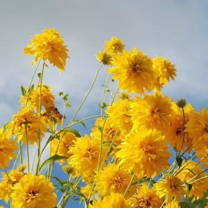 flower-256776_1920
