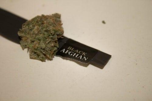 Black Afghan strain