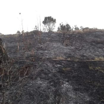 Loma de Pinar, Ocoa luego de controlado el Incendio forestal en esa parte de la Montaña. Lunes 25 de enero, 2021