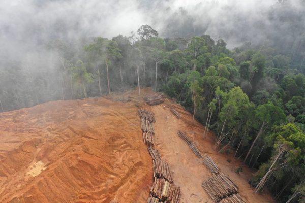 deforestacin-durante-pandemia-amazonas.23-02-2021.medio-ambiente-1024x683
