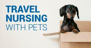 Travel Nursing with Pets