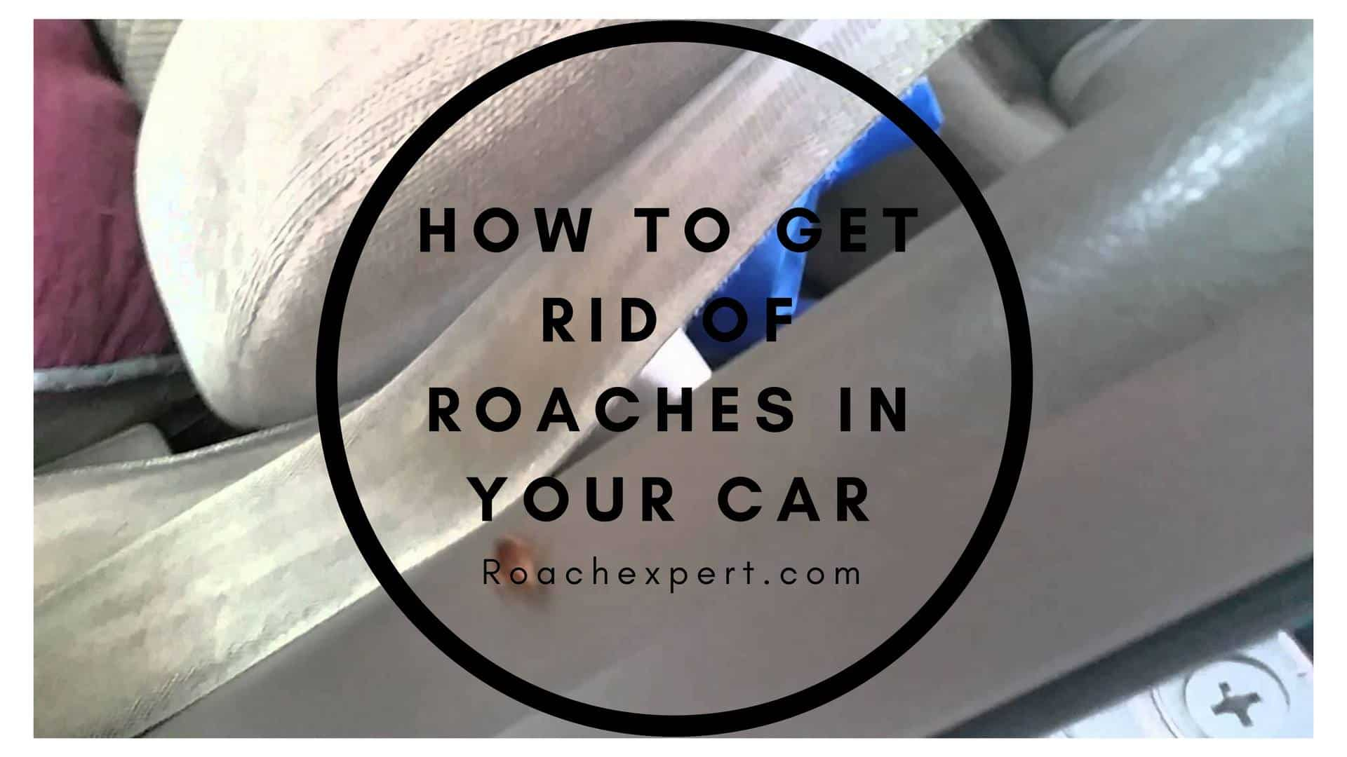 How To Get Rid Of Roaches In Your Car
