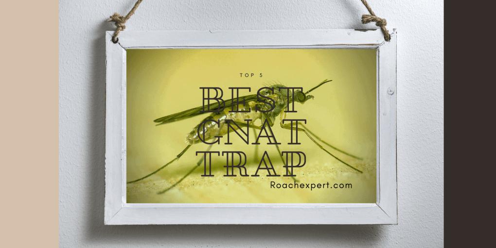 Top 5 Best Gnat Trap Reviews
