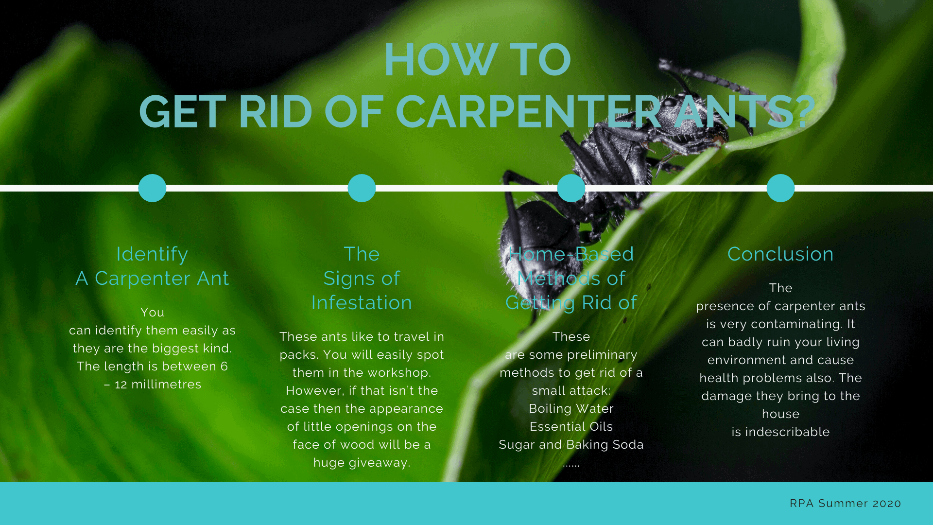 how to get red of carpenter ants