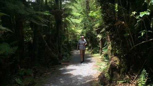 Fox Glacier Viewpoint Trail