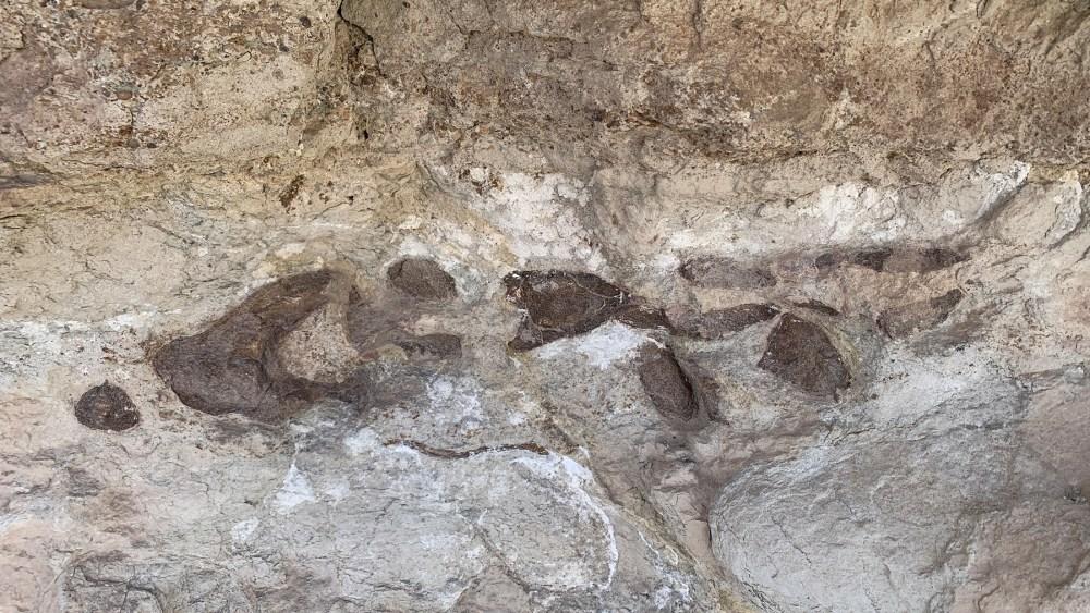 Mill Canyon Dinosaur Bone Trail