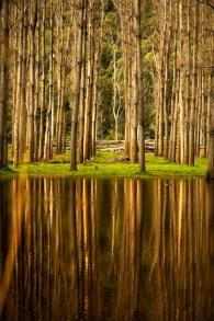 Landscape-13