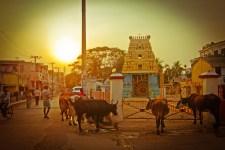 Chennai Back Streets 17