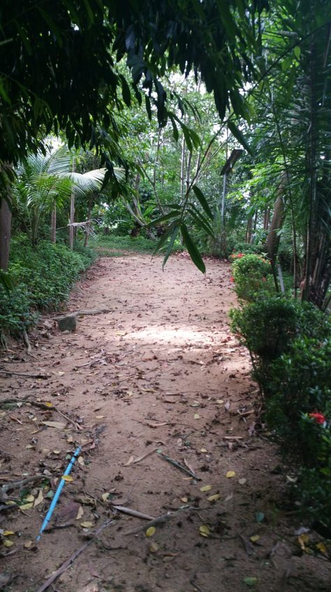 One of the winding jungle pathways at Dipabhavan Meditation Retreat.