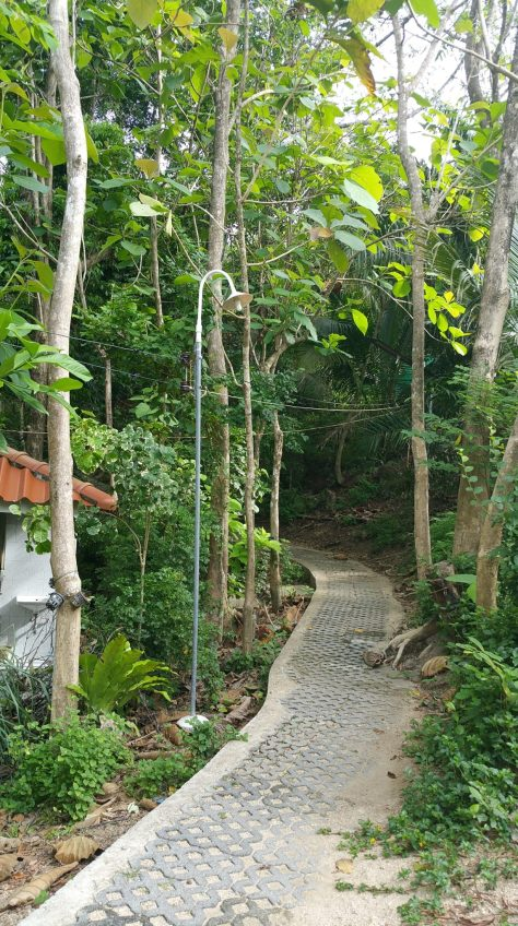 The beginning of the jungle path from the dinning hall to the meditation hall