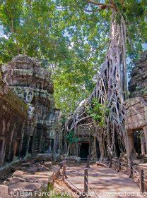 Angkor-22