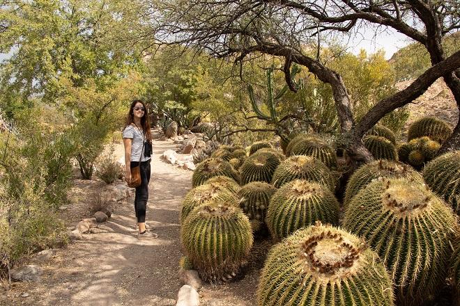 Boyce Thompson Arboretum, Arizona