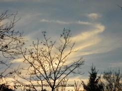 Silhouette of mostly bare tree branches against evening clouds