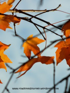 orange maple leaves and twigs against the sky