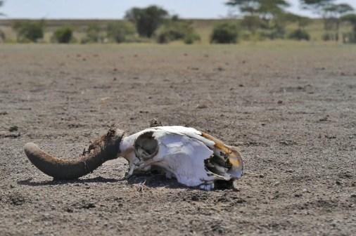 Selbstfahrer Safari Tansania