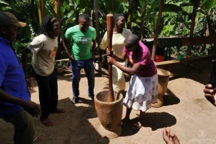 Materuni Kaffee Plantage
