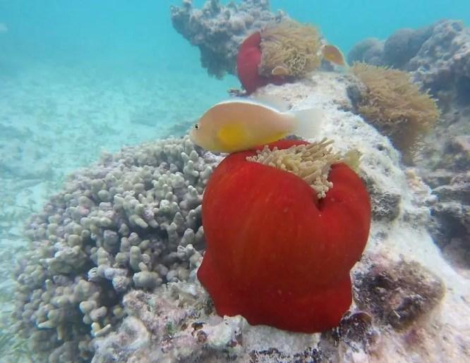 Sansibar Schnorcheln