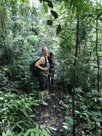 Sumatra Dschungel Orang Utans