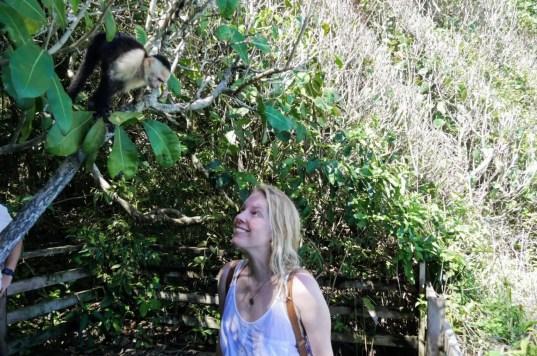 Manuel Antonio Park - Begegnung mit Affen