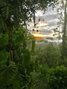 Dschungel am Bolita Rainforest Hostel