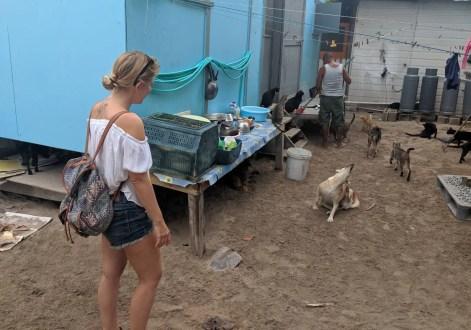 Animal Shelter Caye Caulker