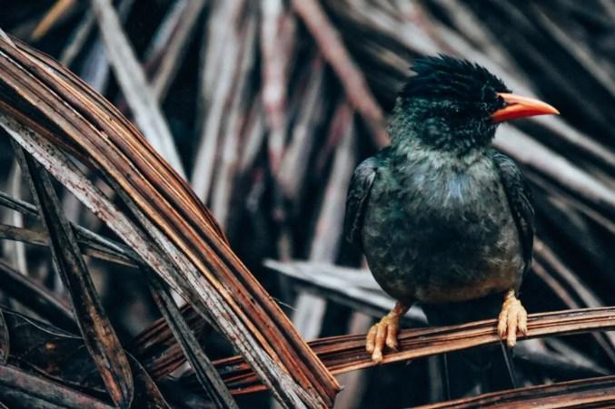 Vogel im Valle de Mai