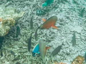 Schnorcheln auf den Seychellen