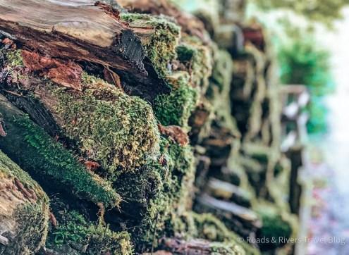 Holzstapel am Nussensee