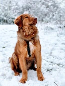 Aaro im Schnee